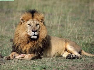 fotos, león