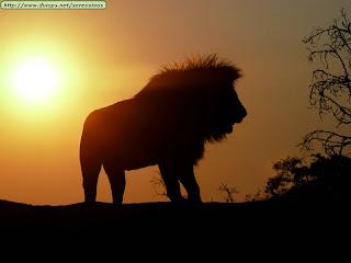 fotos, leon, rey, selva