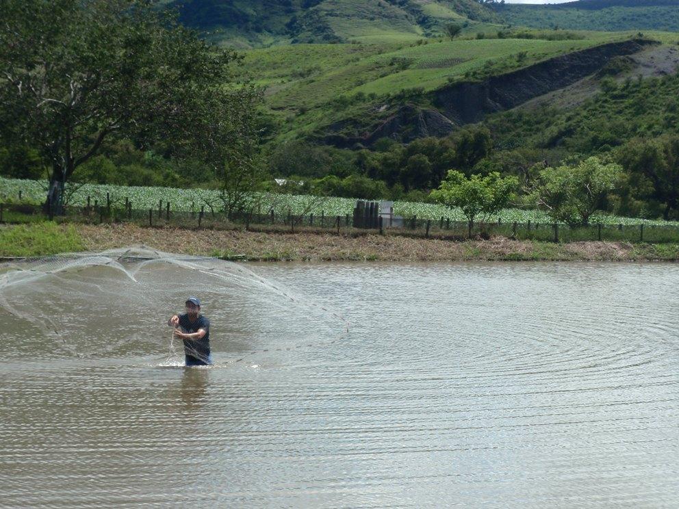 Postales guerrerenses criadero de mojarras el pescador for Criadero de mojarras