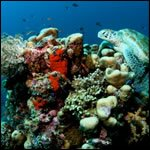 The Coral Triangle, Sulu and Sulawesi Seas