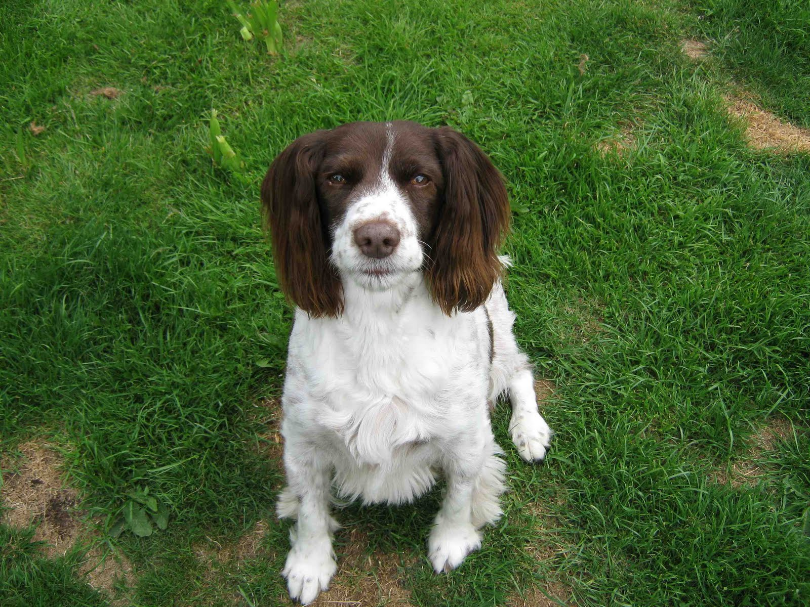 How do I get my deaf dog's attention?