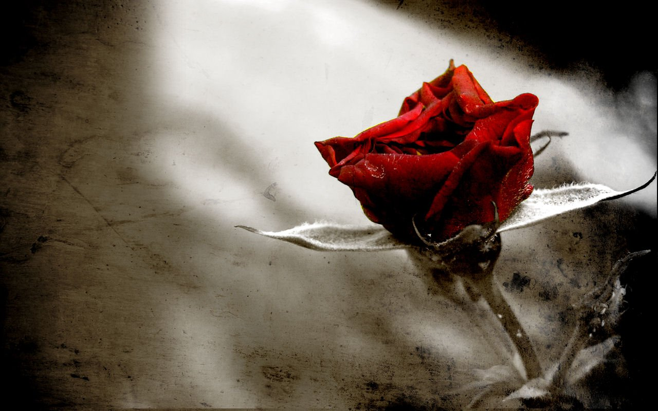 Gothic Rose Wallpaper Free Wallpapers