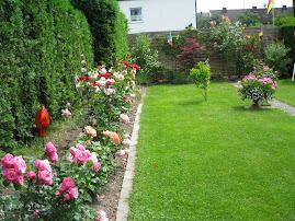 Trandafirii din curte
