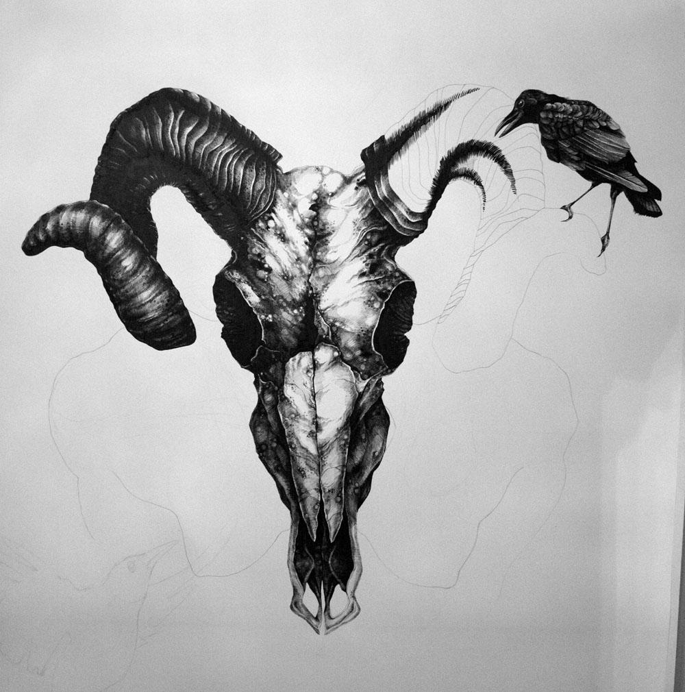 Art by Samantha DeCarlo: Aries Ram Skull (Update)