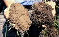 Soil Health