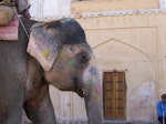 Jaipur Elephant