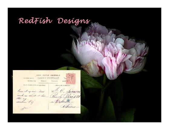 RedFish Designs
