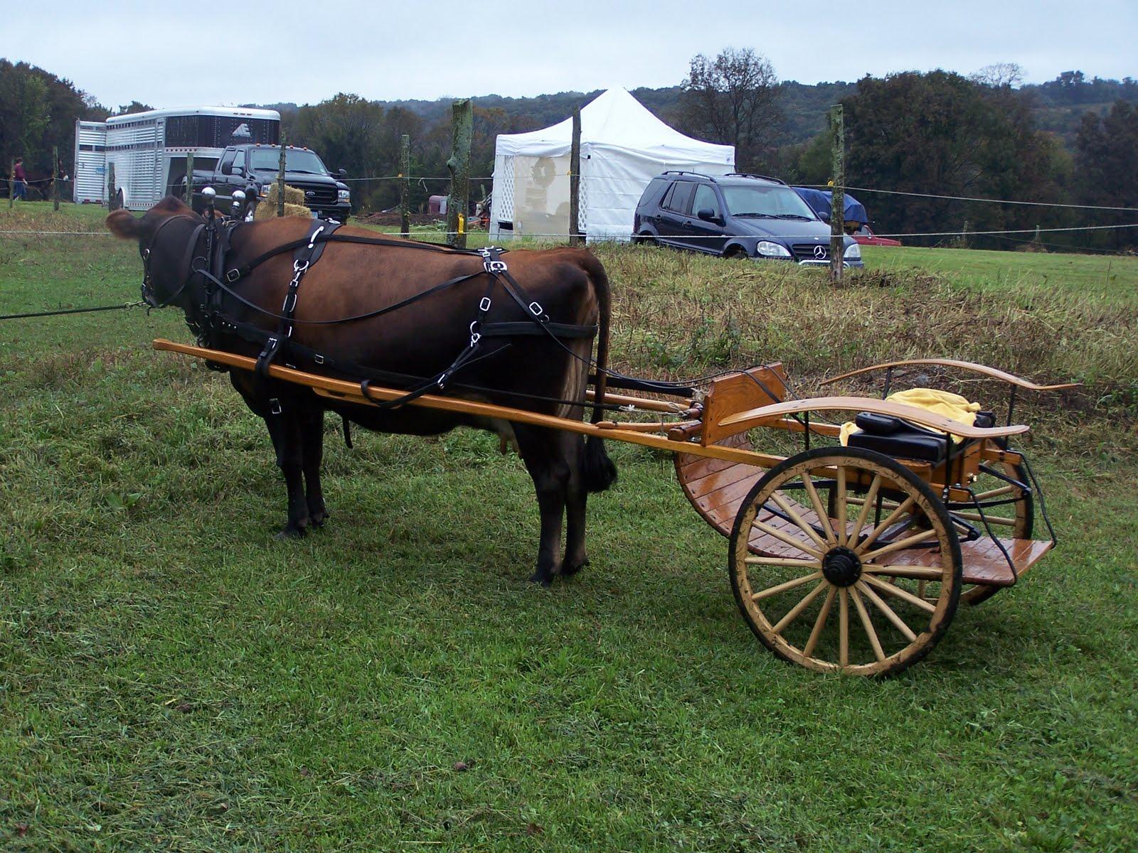 Pulling A Wagon : Wagon pulling harness husky elsavadorla