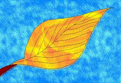 my 'Leaf on Water'