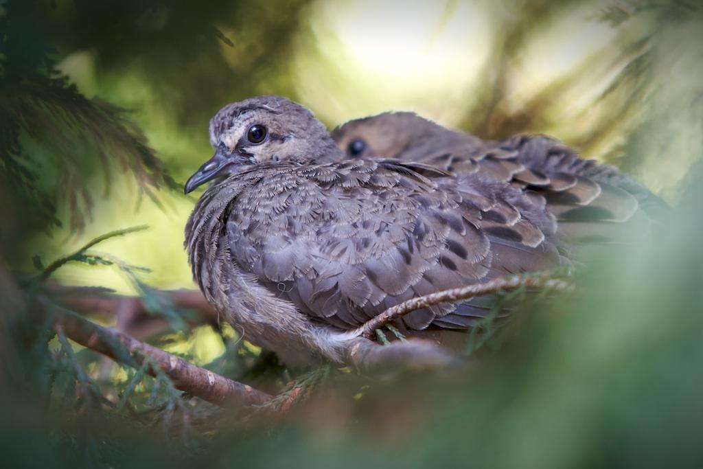 Small Indiana Birds Indiana Birding And Nature