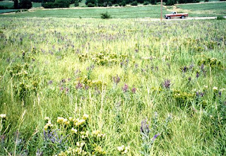 [Dieken Prairie, July 2002 photo by Ernie Rousek]