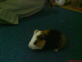 my pet in yaman :D