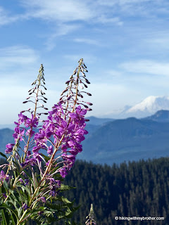 fireweed chamerion angustifolium kendall peak hikingwithmybrother