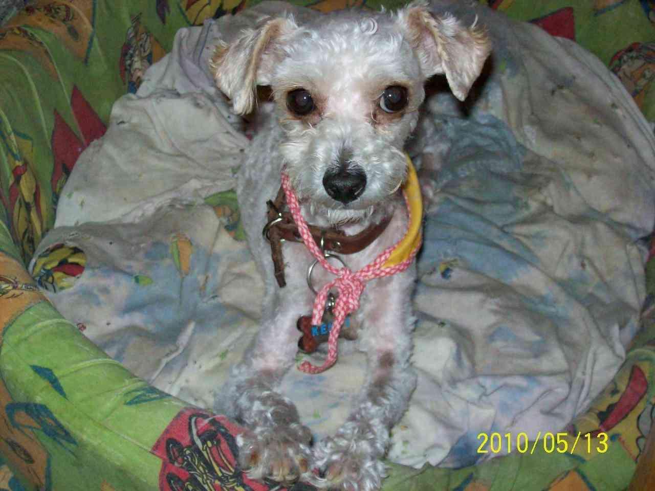 Imagenes Amor Perros French Poodle Kamistad Celebrity Pictures