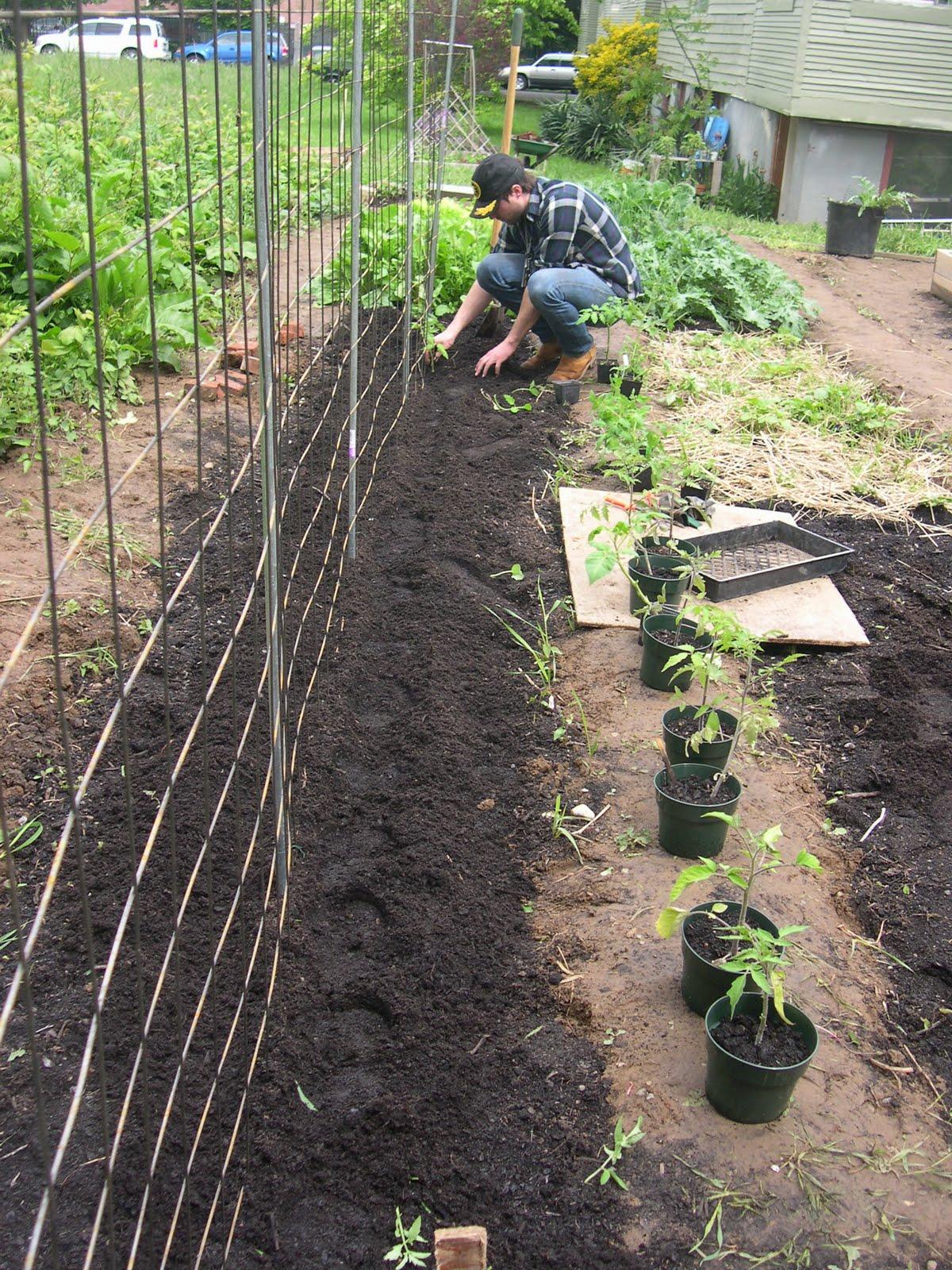 Stanton St. Farms: Trellis Built, Tomatoes Planted!!!