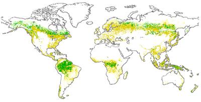 Mapa Forestal Mundial