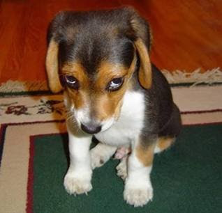 Funny Dog Picture: Funny Puppy Picture