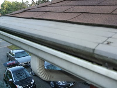 Hooded Leafguard gutter Toronto wasps