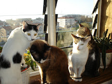 Os meus gatinhos