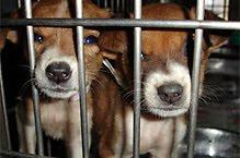 Declaração Universal de Bem-Estar Animal (DUBEA)