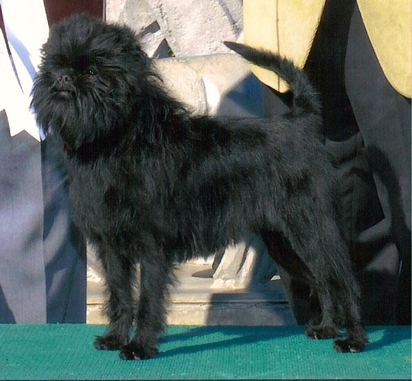 Doggie Corral Pet Supp...