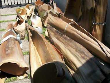 casca de palmeira