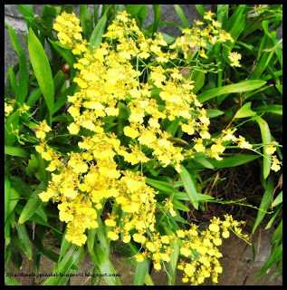 ornamental plants pictures with names pdf