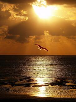 manto de alegría en lugar del espíritu angustiado