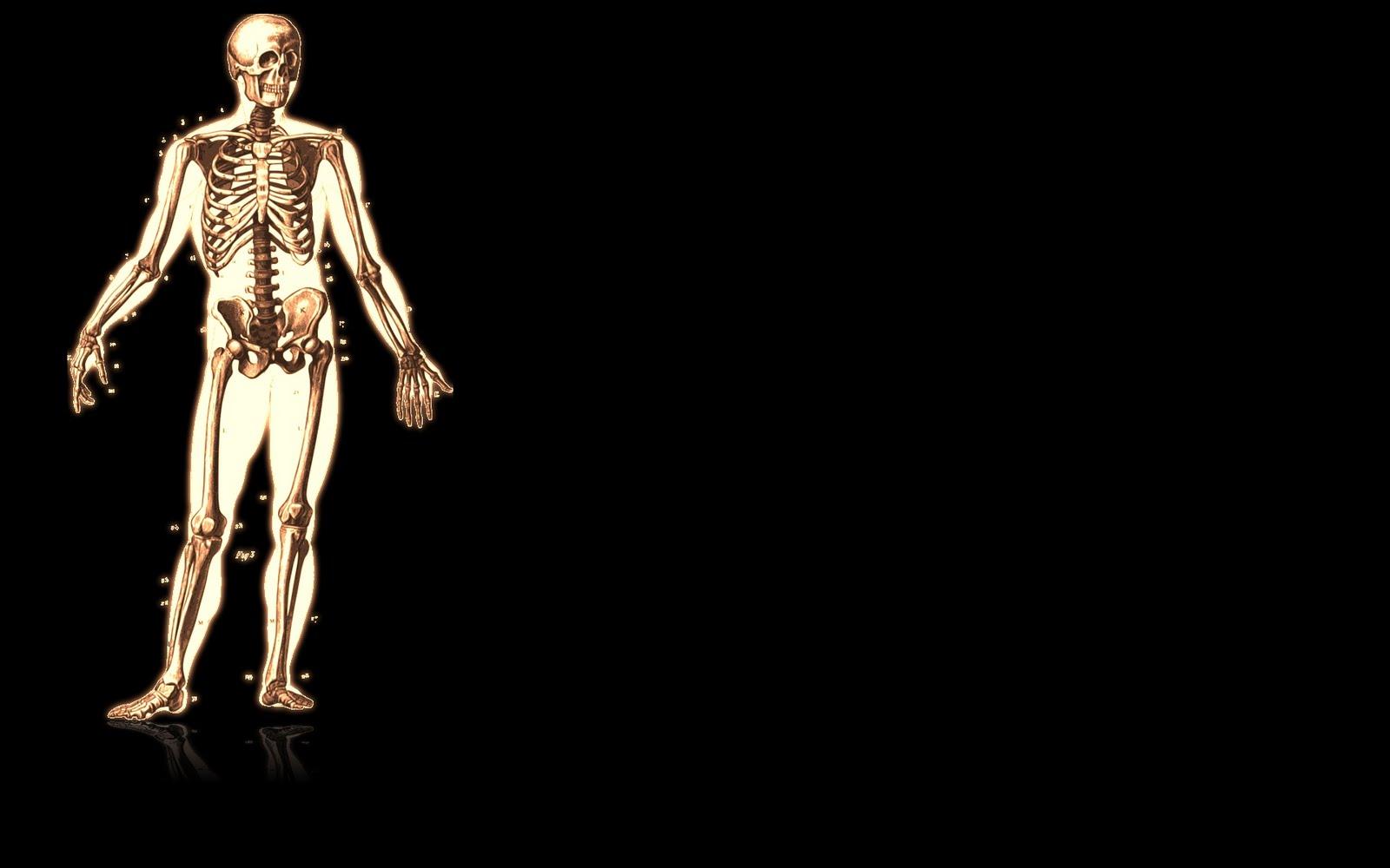 http://1.bp.blogspot.com/_J9PlRvGGXS8/SwX1Gc9gJ6I/AAAAAAAACMU/HBZCtv51bAw/s1600/skeleton-wallpaper-3.jpg
