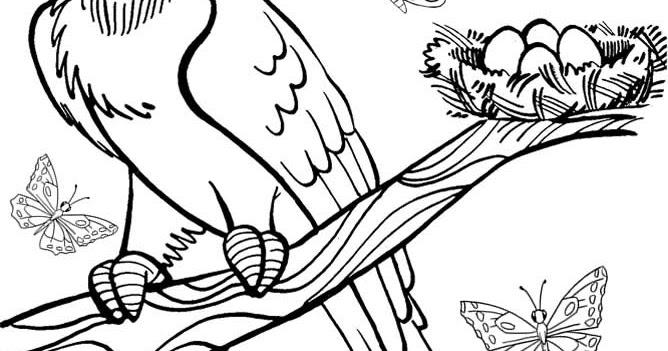 desenho de arara azul para colorir desenhos para colorir