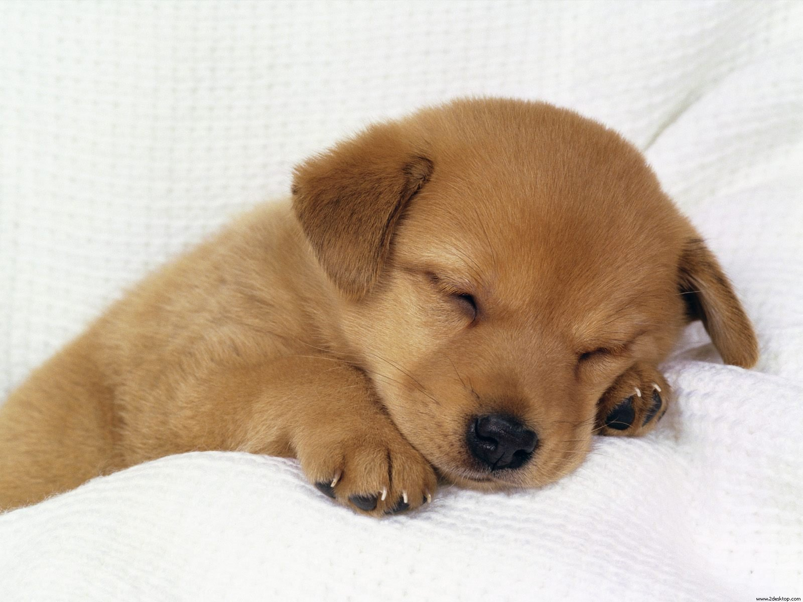 kabel data ilang: puppies screensaver