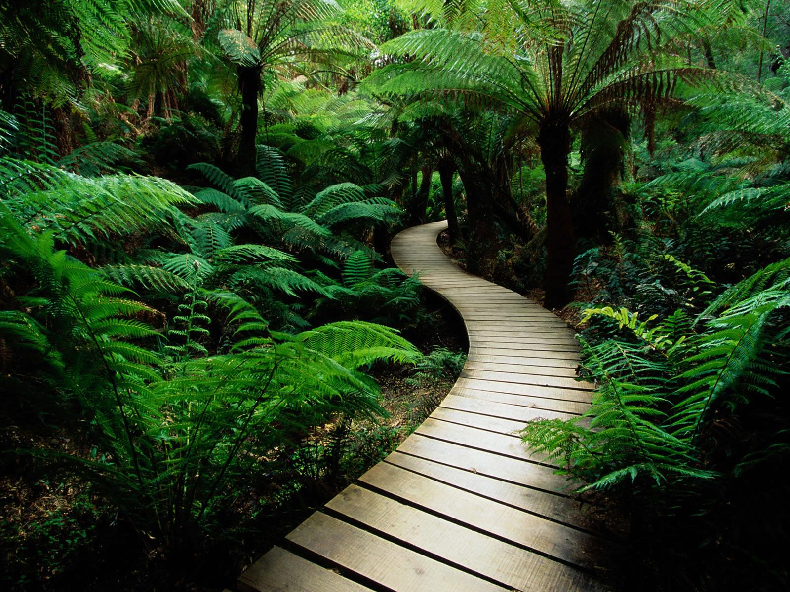 http://1.bp.blogspot.com/_JClEFgsqLig/TMBCQyYTZII/AAAAAAAAAo0/MStCQP27eLc/s1600/serene-nature-walk-trail.jpg