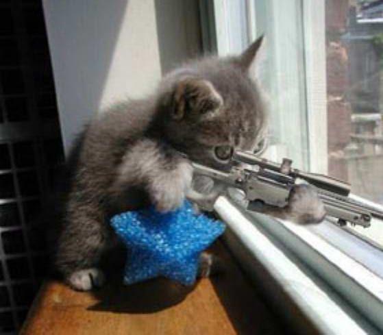 El Francotirador en la mira