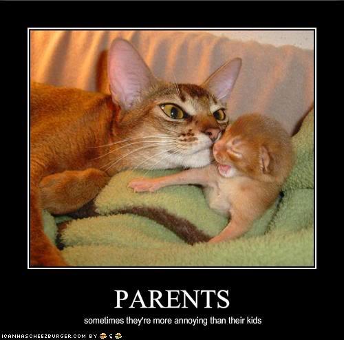 Can A Cat Do Dpt