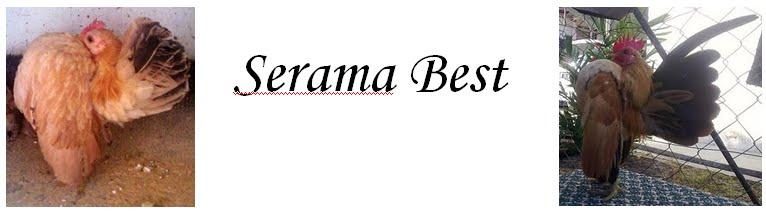 Serama Best