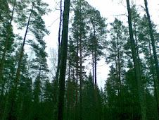 Latokaski-Lugnet