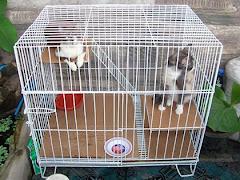 Jual Kandang kucing 60x80x60