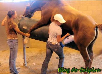 recolher semen de cavalo, trabalho que não quero ter
