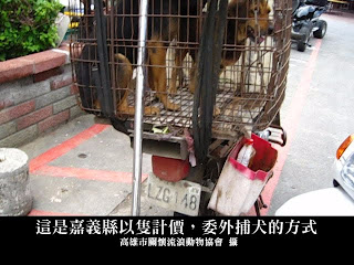 圖片提供:動物社會研究會