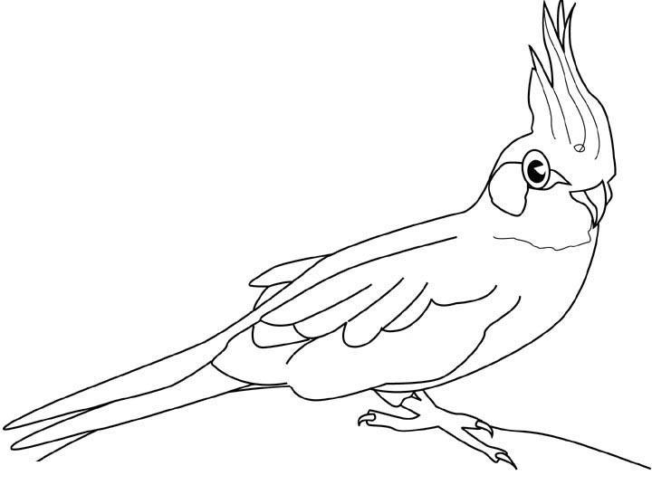 Раскраски попугай - 4