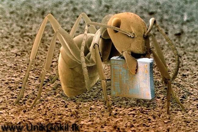 Gambar Foto yang diperbesar dengan Mikroskop Unik Keren