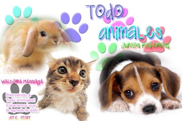 Todo Animales |Tu mejor web de info sobre animales|