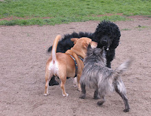 Frankie & Friends at the Alameda Small Dog Park .