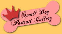 Small Dog Portrait Gallery