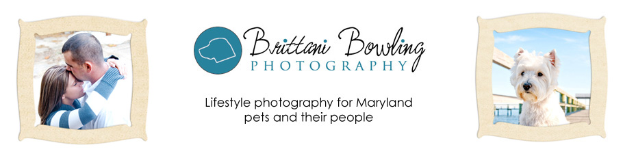 Brittani Bowling Photography » the blog