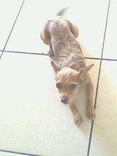 Minha Cachorrinha MEL