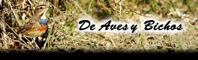 DE AVES Y BICHOS