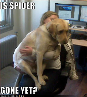 funny dog pictures is spider gone yet, funny dog, funny animal pictures, funny animals, is spider gone yet, scaried dog funny