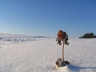 [Image: snow.jpg]
