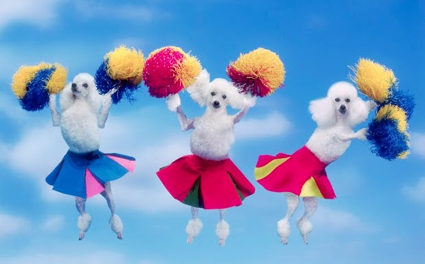 Poodles cheering you on